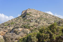 Mediterranean scrub on a mountain of Crete Royalty Free Stock Photography