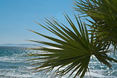 Mediterranean sea. With palm leaves in the foreground and mountains at the horizon Stock Images