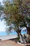 Mediterranean Sea, beach, tree Sougia, Crete, Greece Royalty Free Stock Photo