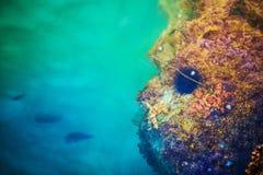 Mediterranean Sea Life Royalty Free Stock Photos