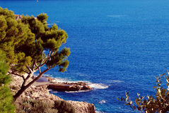 Mediterranean Sea near Nice France. Sea off the rocky shore, which is growing pine, scrub and other greens Stock Photos