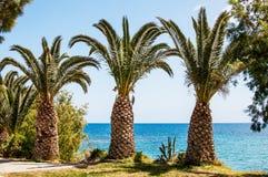 Mediterranean Sea palm trees on the seaside, Crete, Greece stock photos