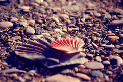 Mediterranean Sea Shells. Lido di Ostia beach. Rome, Italy stock image