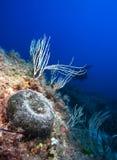 Mediterranean sea. Stock Images
