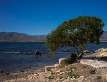 Sea view. Mediterranean sea view with green bushes Royalty Free Stock Image