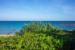 Sea view. Mediterranean sea view with green bushes Stock Image