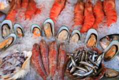 Mediterranean seafood display Stock Images