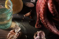 Mediterranean seafood. Whole fresh raw octopus with white wine, lemon and garlick, rustic background, top view stock photos