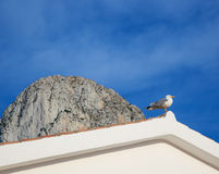 Mediterranean seagull on the roof tip. And Ifach Penon of Calpe  in background Royalty Free Stock Images