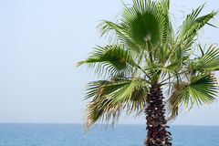 Mediterranean Seas palmtree Royalty Free Stock Images