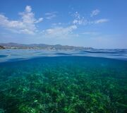 Free Mediterranean Seascape Sea Grass Underwater Royalty Free Stock Images - 168757559