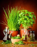 Mediterranean seasoning. With spices, herbs, olive and herbal oil Stock Images