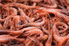 Mediterranean shrimps Royalty Free Stock Images