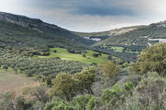 Mediterranean shrublands and flowering fallows Stock Photo