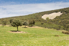 Mediterranean shrublands and flowering fallows Stock Photography
