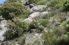 Mediterranean shrublands Royalty Free Stock Photos