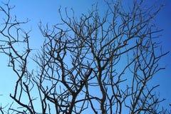 Mediterranean shrubs in winter stock images