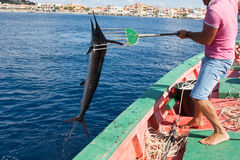 Mediterranean spearfish Royalty Free Stock Photos