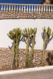 Mediterranean stone wall with cactus. In Portugal Royalty Free Stock Photos
