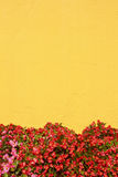 Mediterranean style wall. Yellow mediterranean style wall with flower Royalty Free Stock Images