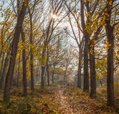 Mediterranean sun autumnal forest Royalty Free Stock Photography