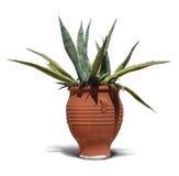 Mediterranean terracotta cactus pot  Royalty Free Stock Photo