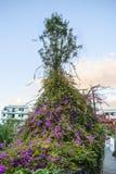 Mediterranean town. Bush - flower - mediterranean architecture -  town - tenerife - canary island Stock Image