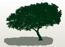 Mediterranean tree. Vector silhouette of the mediterranean tree Stock Photo