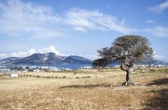 Mediterranean tree Stock Images