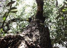 Mediterranean Trees Stock Photography