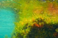 Mediterranean underwater algaes reflection royalty free stock photography