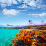 Mediterranean underwater seaweed Denia Alicante spain Stock Image