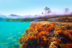 Mediterranean underwater seaweed Denia Alicante spain Stock Photo