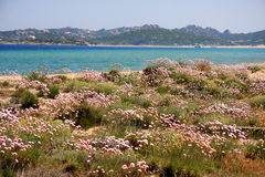 Mediterranean vegetation Stock Photos