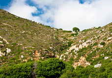 Mediterranean vegetation Royalty Free Stock Photos