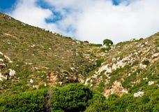 Mediterranean vegetation. In a hillside in Greece Royalty Free Stock Photos