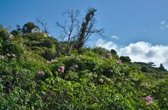 Madeira, Portugal - exotic vegetation in spring. Mediterranean vegetation on an amazing island. Everything is fresh green Royalty Free Stock Photography