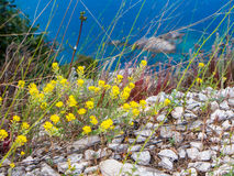 Mediterranean vegetation Royalty Free Stock Photo