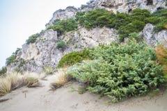 Mediterranean vegetation Stock Photography