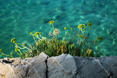 Mediterranean vegetation over the beautiful Adriatic sea. Mediterranean vegetation over the beautiful turquoise Adriatic sea Royalty Free Stock Photography