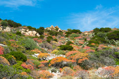 Mediterranean vegetation Stock Photography