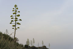 Mediterranean vegetation. Stock Images