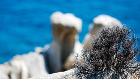 Mediterranean view. A thorny bush in front of seaside rocks Stock Photography
