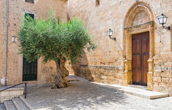 Mediterranean village with olive tree. Old mediterranean olive tree in the mediterranean village Sineu on Majorca island, Spain Royalty Free Stock Photos