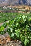 Mediterranean vineyard Stock Photo