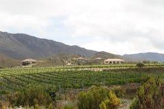 Mediterranean vineyard country villas Royalty Free Stock Images