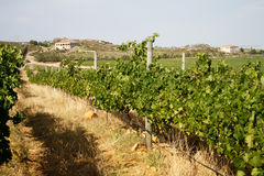 Mediterranean vineyard country villas Stock Images