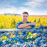Mediterranean vineyard farmer harvest cabernet sauvignon Royalty Free Stock Photos