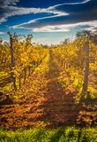 Mediterranean Vineyard on the hill Royalty Free Stock Images