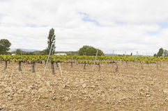 Mediterranean vineyards in Castilla y Leon north of Spain Royalty Free Stock Photography
